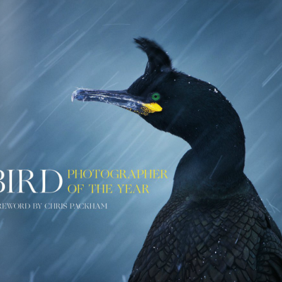bird-photographer-of-the-year-book-2016