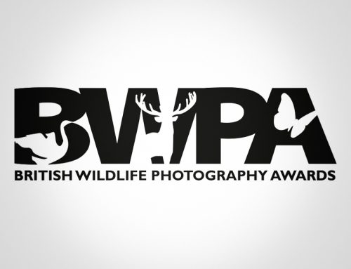BWPA winning images for 2018