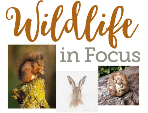 Arts Melbourne Gallery – Wildlife in Focus